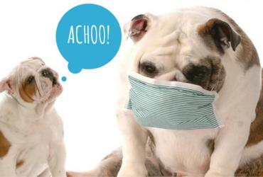 Làm thế nào khi chó bị chảy nước mũi?